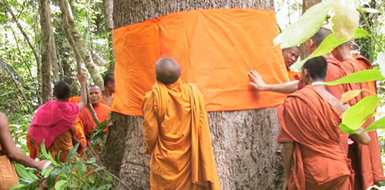 "Cambodian monks ""ordain"" a tree to keep it safe from illegal loggers."